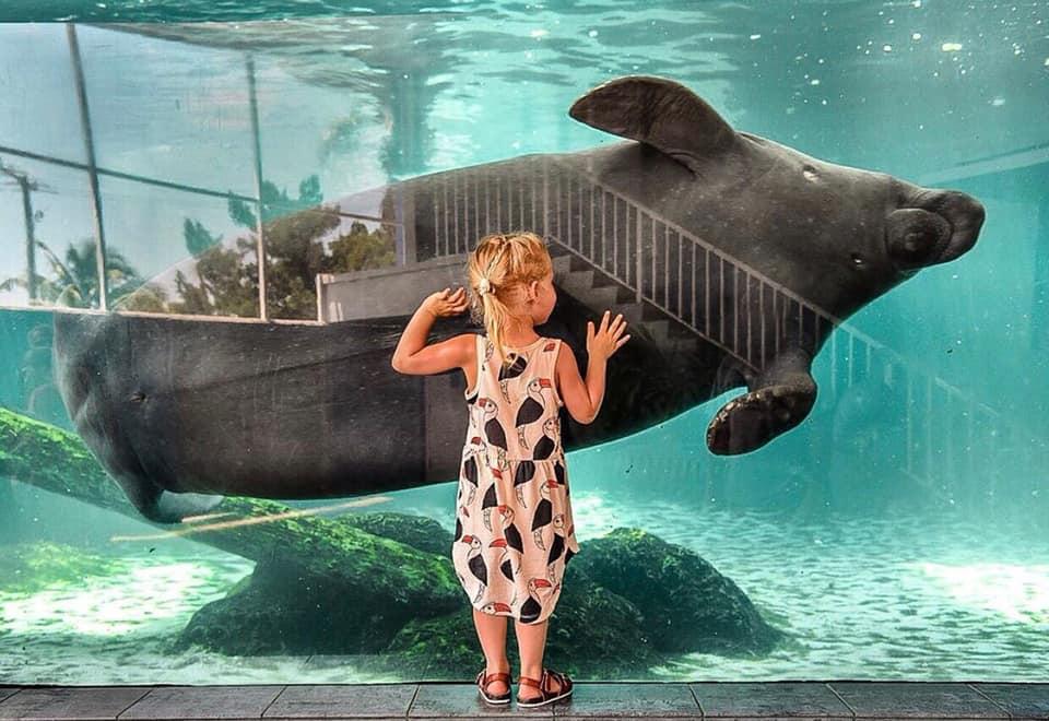 Little girl staring at manatee at the Mote Marine Aquarium in Sarasota, FL