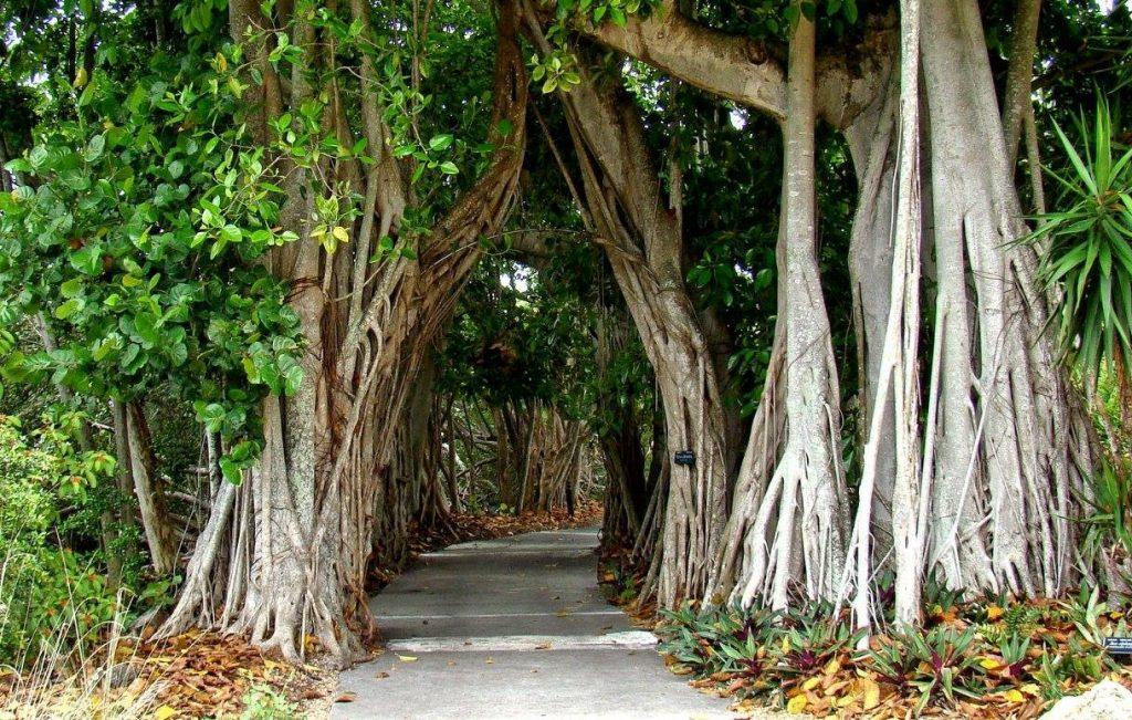 Trail at Oscar Scherer Park in Florida