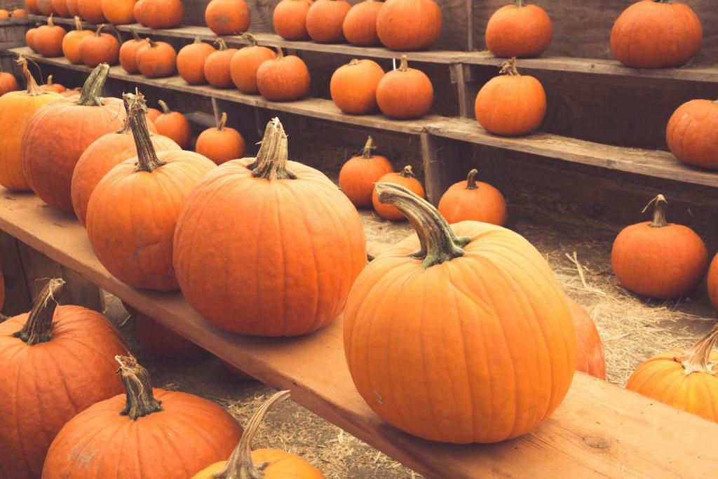 Pumpkin patch Sarasota