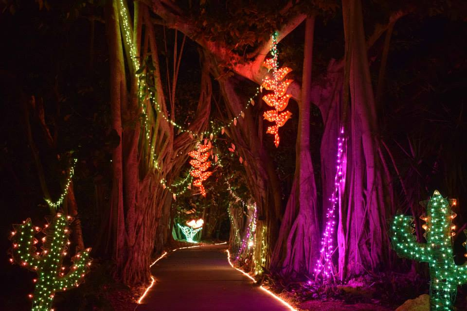 Pathway at Lights in Bloom event in Sarasota